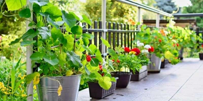 Cómo elegir la maceta adecuada para tus plantas