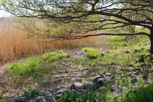 Terreno pantanoso